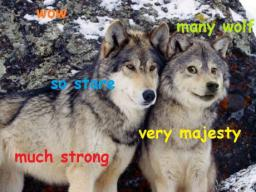 many-wolf-so-stare.jpg