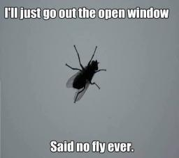 fly-just-go-out-this-open-window.jpg
