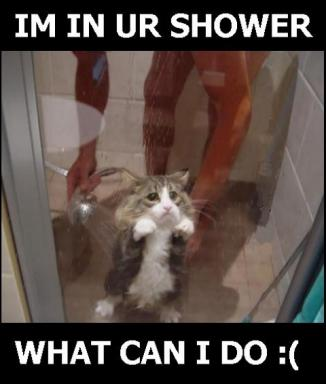 cat-shower.jpg