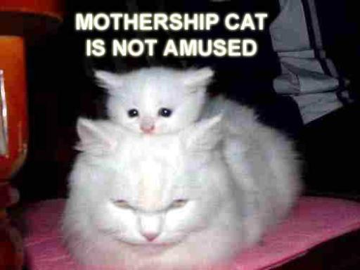 cat-mothership.jpg