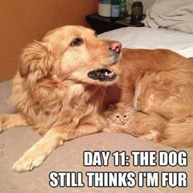 cat-dog-thinks-i'm-fur.jpg