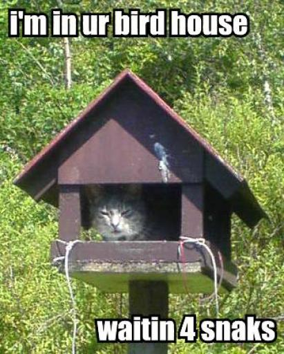 cat-birdhouse.jpg