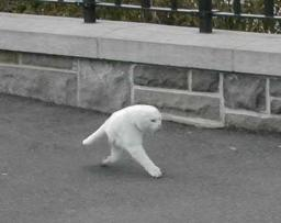 cat-coolwalk.jpg