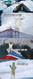 polar-bear-help-you.jpg