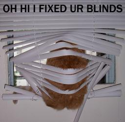 cat-fixblinds.jpg