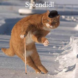cat-splendid.jpg