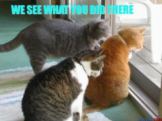 cat-we-see-what-you-did-there.jpg