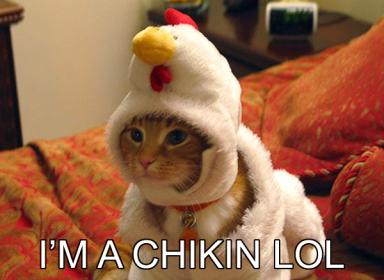 cat-chicken.jpg