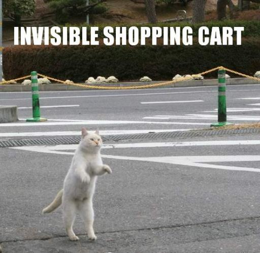 cat-shopping.jpg