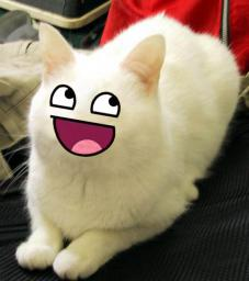 cat-mega-happy.jpg