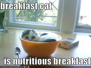 cat-breakfast.jpg