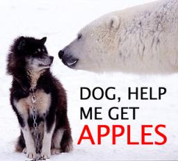 dog_help_me_get_apples.jpg