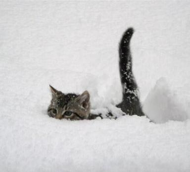 cat-snow-submarine.jpg