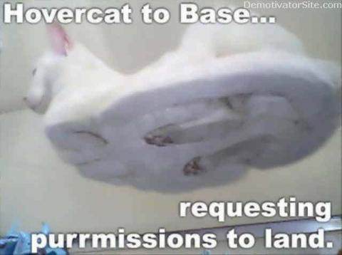 cat-hover-to-base.jpg