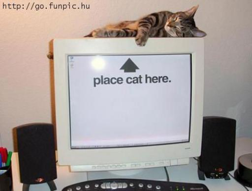 cat-placehere.jpg