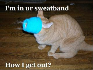 cat-sweatband.jpg
